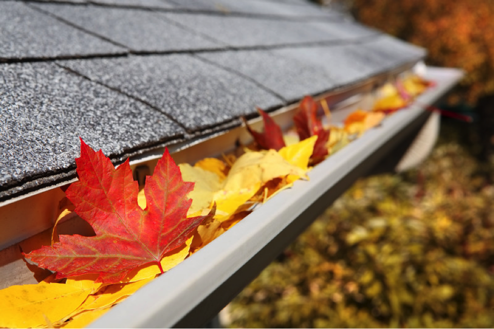 Gutter Cleaning: A Quick Appointment, and A Big Payoff