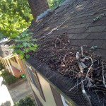 Gutter Cleaning Before