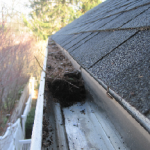 Clean Your Gutters Every Year